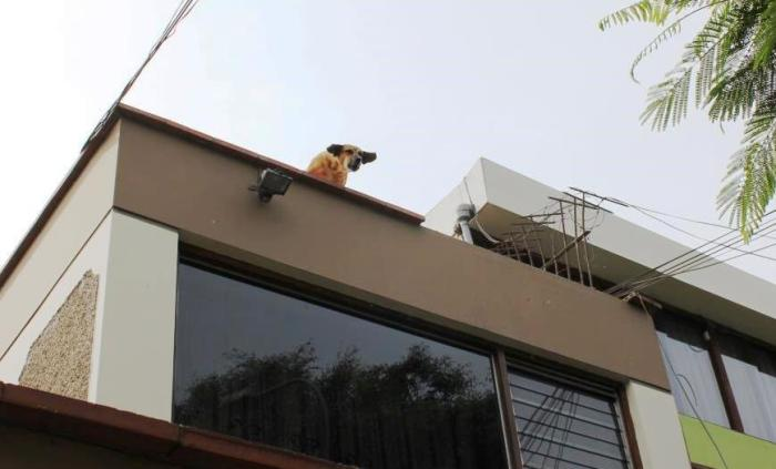 roof dog c