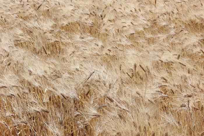 grain2 c