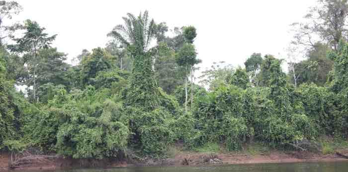 bush c