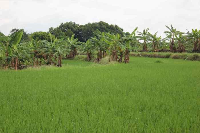 rice 2 c