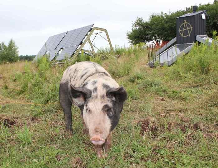 Solar Pig 1
