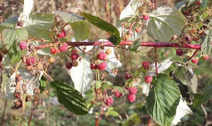 raspberry 2 doc